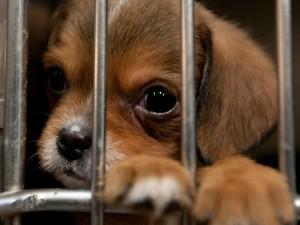 Вольер для собаки чертёж, описание, назначение. Сборные вольеры